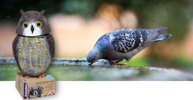 Búho espantapájaros: Una eficaz solución para ahuyentar a las aves